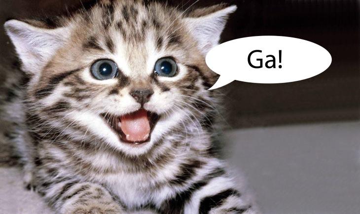 frustrated-ga-kitten