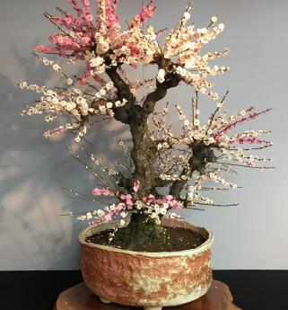 Bonbai tree
