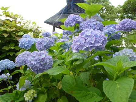 ashikarien-6.101