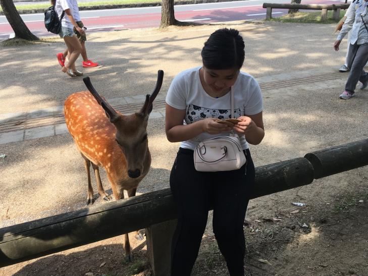 Nara deer.png