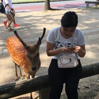 nara-deer.png